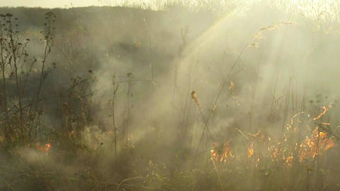 sun shines through the smoke and fire, burning dry grass and bushes in early spr Footage