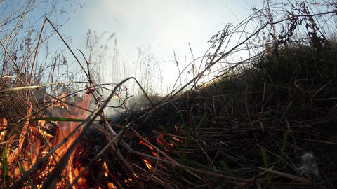 burning dry grass and bushes, fire in the steppe, prairie, savanna Footage