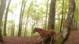 young horses on a mountain road in the woods video filmed with a riding cart Footage