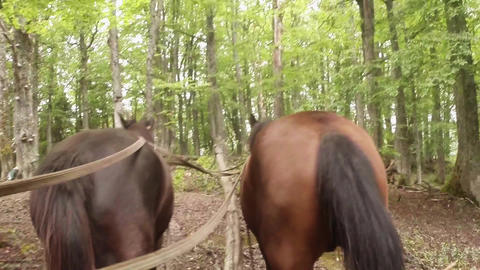 first-person view - old horse carriage rides through the mountains Footage