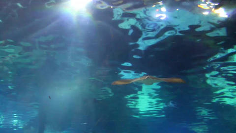 Big Fish (Ray) under water Stock Video Footage