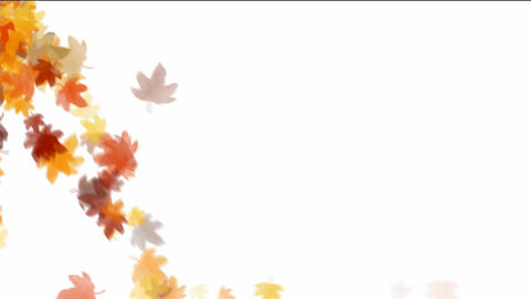 leaves falling down on white background Animation