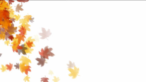 leaves falling down on white background Stock Video Footage