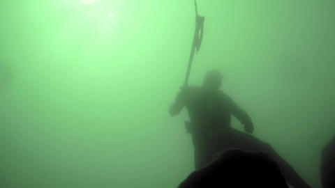 Spearfisher shoots a large perch and dives towards the surface Footage
