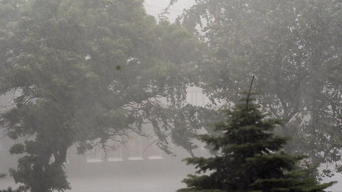 Extreme Hurricane Winds Lash Trees In Ukraine Footage