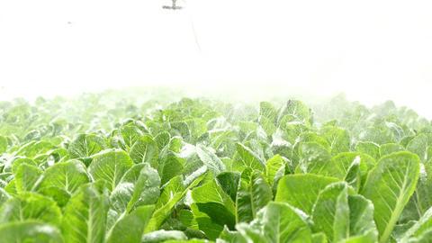Fog Spray System In Hydroponics Gardens stock footage