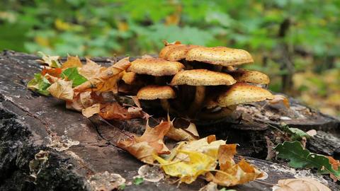 Forest Mushrooms Slider Shoot stock footage