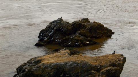 birds on a rock around water Footage