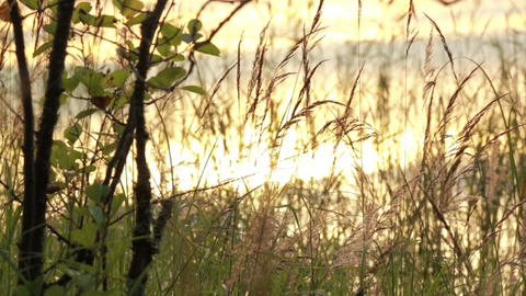 Slowly panning shot of backlight shore grass Footage