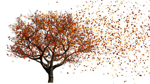 Tree. From Spring To Autumn stock footage