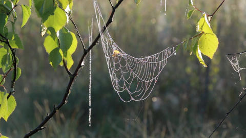 MVI 3087 spiderweb hanging V 1 0016 ビデオ