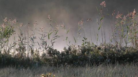 Foggy Lake Sunrise