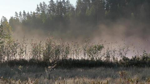 Foggy Lake Sunrise 0