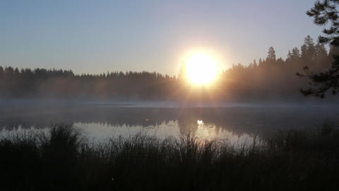 Locked-down shot of rising sun behind trees at a foggy lake in morning Footage