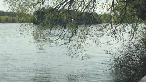 calm lake ripples on water tree reflection Footage