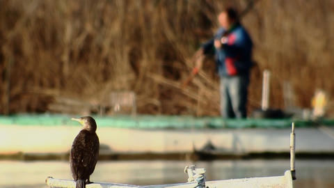 cormorant and fisherman Footage