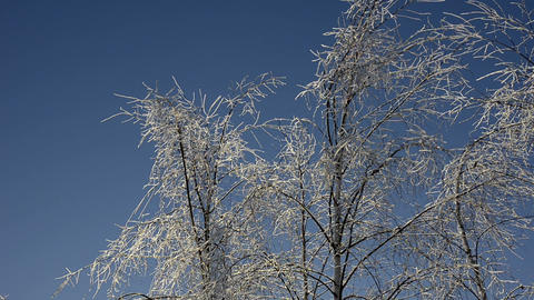 Beautiful frozen winter forest Footage