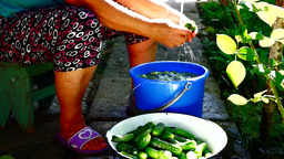 Hands of woman washing cucumbers in the yard Footage