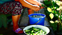 Hands of woman washing cucumbers in the yard with sound Footage