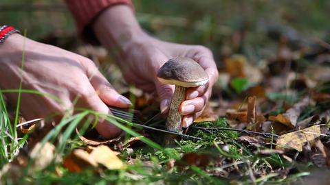 Gathering of Mushrooms Footage