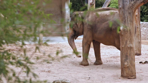 A Couple Of Indian Elephants stock footage