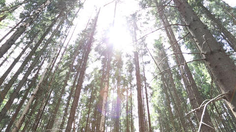 The sun rays pass through the trees Footage