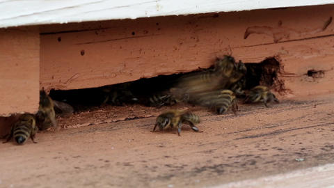 Worker bees near beehive Footage