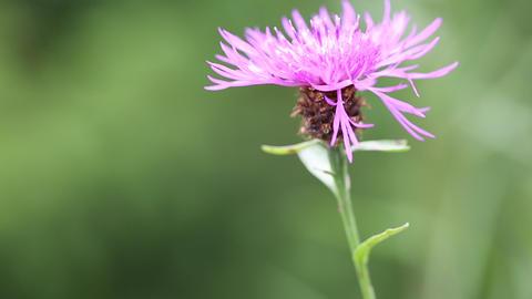 Purple flower Footage