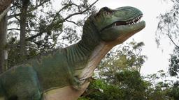 Tyrannosaurus rex Footage