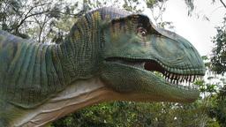 Tyrannosaurus rex close up Footage