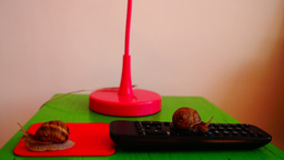 Snails On Remote Control stock footage