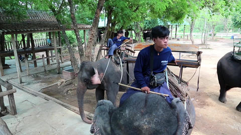 Mahouts - people who works with, rides, and tends an elephants Footage