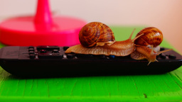Snails crawling on remote control Footage