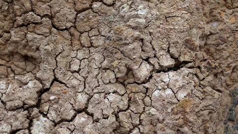 Yellow soil with cracks ビデオ