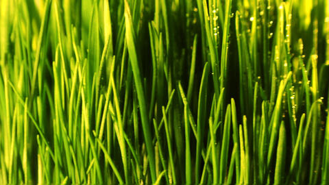 Green Grass Loop stock footage