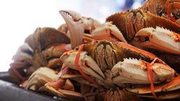cooked dungeness crabs Footage