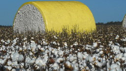 cotton bale Footage
