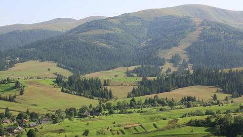 Beautiful green hills and coniferous forest in Carpathian Mountains, Ukraine Footage