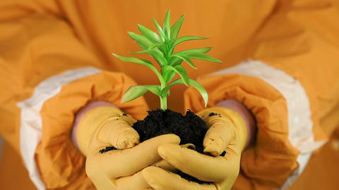 Human in orange protective suit holding in hands soil and a green young plant Footage