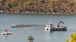 fish farm Footage