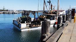 fishing boat at eden Live Action