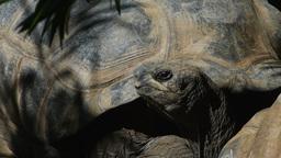 galapagos tortoise Footage