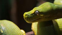 python close up Footage