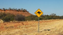 kangaroo road sign zoom Footage