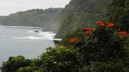 maui's honomanu bay and tulip tree Footage