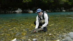 new zealand brown trout and angler Footage
