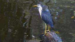 heron Footage
