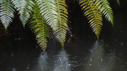 river with raindrops and ferns Footage