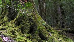 rain forest tree trunk Footage