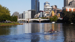 rowers on yarra Footage